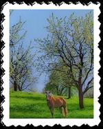 Tavaszikep