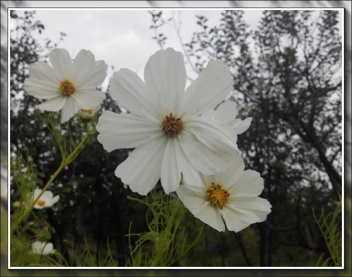 An den Beitrag angehängtes Bild: http://kepmester.silihost.hu/images/1692/10749/00000012.jpg
