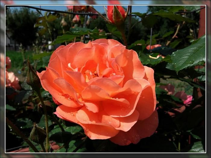 An den Beitrag angehängtes Bild: http://kepmester.silihost.hu/images/1692/11028/00000085.jpg
