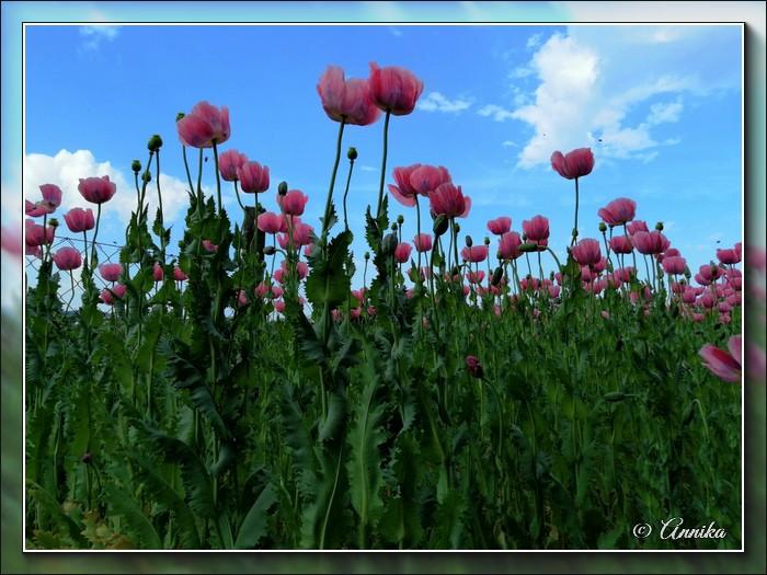 An den Beitrag angehängtes Bild: http://kepmester.silihost.hu/images/1692/11059/00000127.jpg