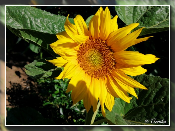 An den Beitrag angehängtes Bild: http://kepmester.silihost.hu/images/1692/11059/00000148.jpg