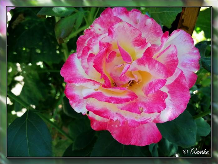 An den Beitrag angehängtes Bild: http://kepmester.silihost.hu/images/1692/11059/00000151.jpg