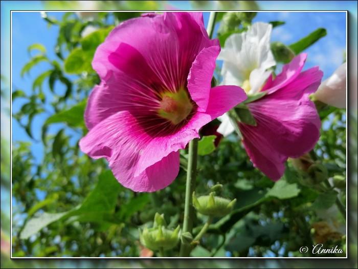 An den Beitrag angehängtes Bild: http://kepmester.silihost.hu/images/1692/11059/00000159.jpg