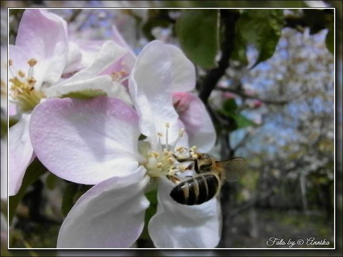 An den Beitrag angehängtes Bild: http://kepmester.silihost.hu/images/1692/11139/00000013.jpg