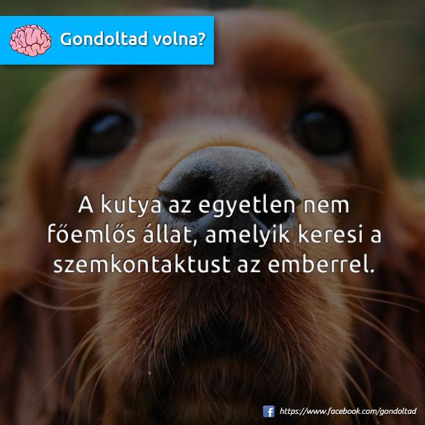 http://kepmester.silihost.hu/images/1703/8901/00000469.png