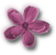 virág