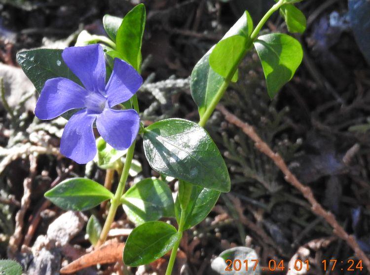 http://kepmester.silihost.hu/images/279/10673/00000141.jpg