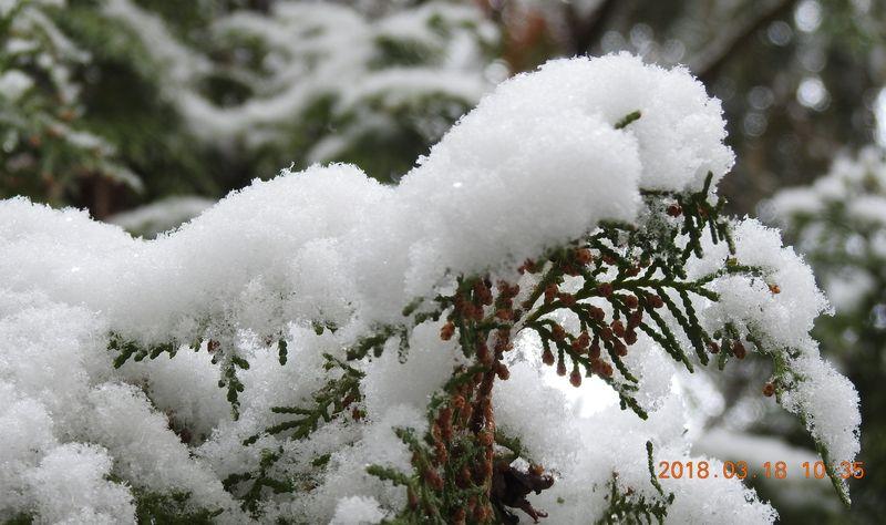 http://kepmester.silihost.hu/images/279/10673/00000368.jpg