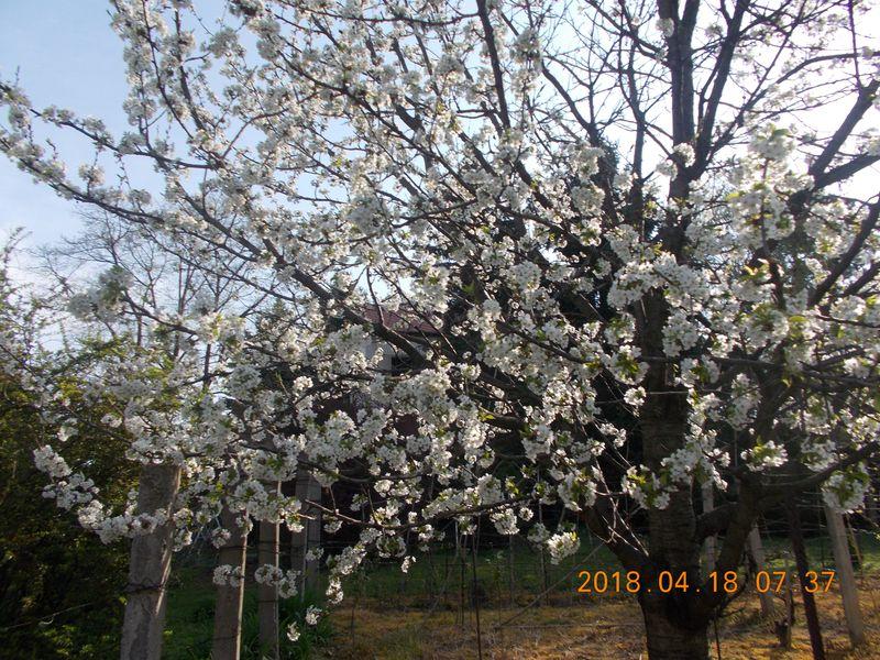 http://kepmester.silihost.hu/images/279/10673/00000386.jpg