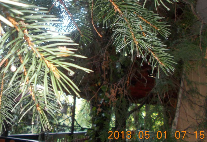 http://kepmester.silihost.hu/images/279/10673/00000405.jpg