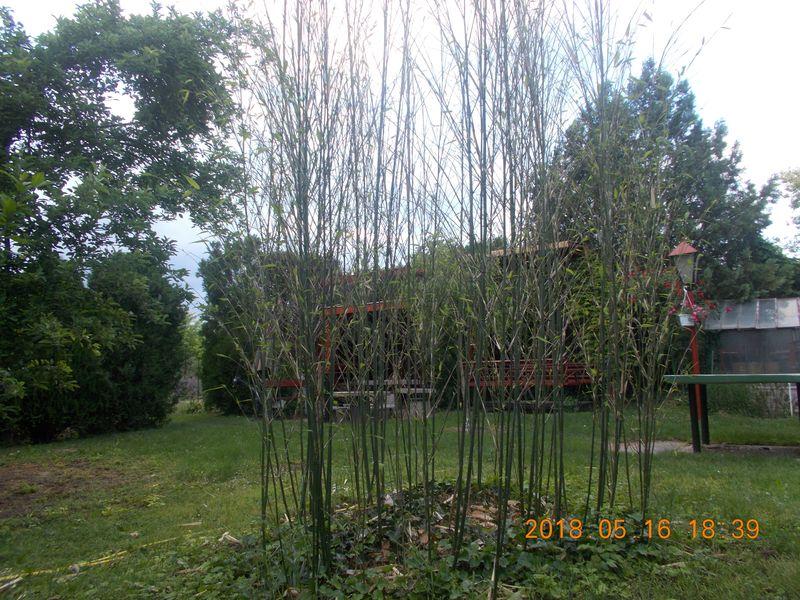 http://kepmester.silihost.hu/images/279/10673/00000413.jpg