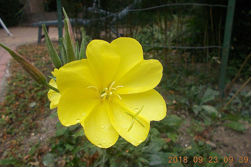 http://kepmester.silihost.hu/images/279/10673/00000480.jpg