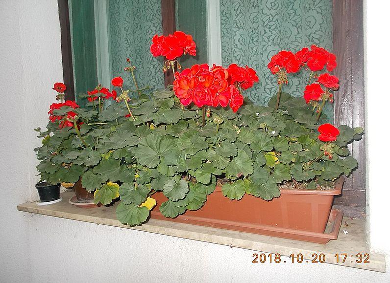 http://kepmester.silihost.hu/images/279/10673/00000489.jpg