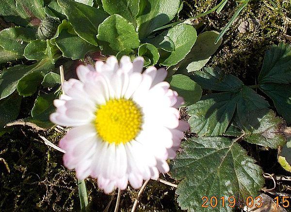 http://kepmester.silihost.hu/images/279/10673/00000528.jpg