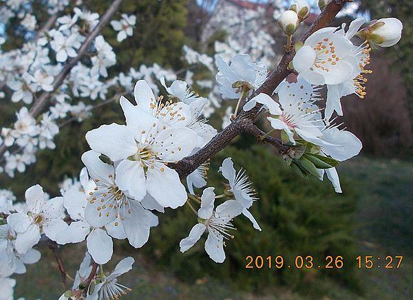http://kepmester.silihost.hu/images/279/10673/00000534.jpg