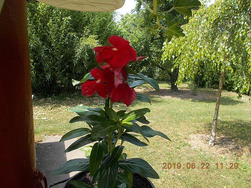 http://kepmester.silihost.hu/images/279/11065/00000027.jpg