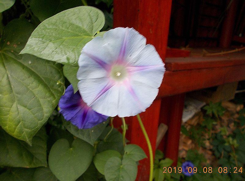 http://kepmester.silihost.hu/images/279/11065/00000063.jpg