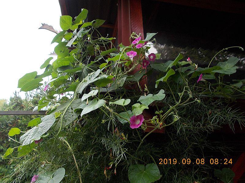http://kepmester.silihost.hu/images/279/11065/00000064.jpg