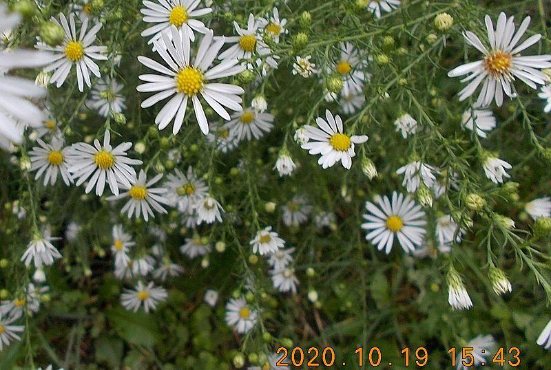 http://kepmester.silihost.hu/images/279/11065/00000181.jpg