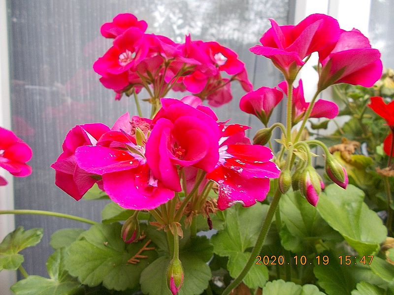 http://kepmester.silihost.hu/images/279/11065/00000182.jpg