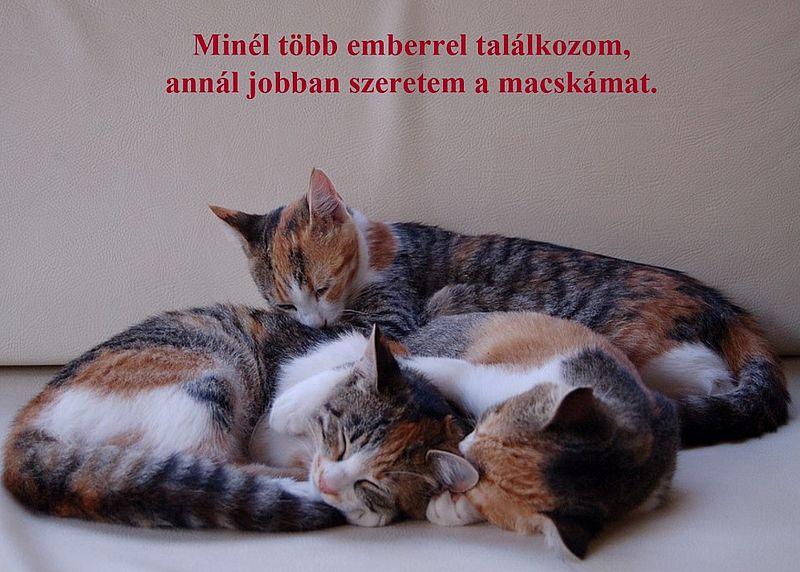http://kepmester.silihost.hu/images/279/11092/00000019.jpg