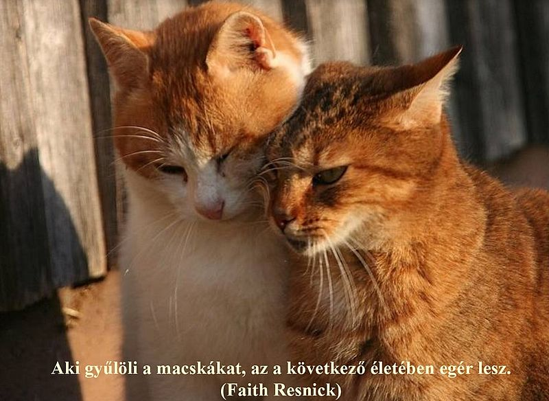 http://kepmester.silihost.hu/images/279/11092/00000023.jpg