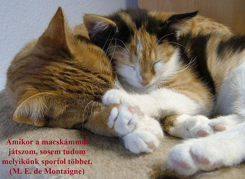 http://kepmester.silihost.hu/images/279/11092/00000025.jpg
