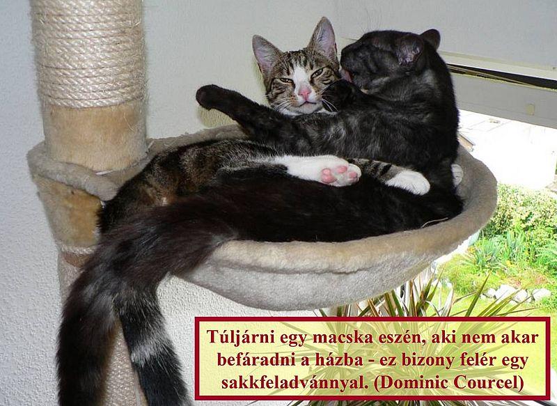 http://kepmester.silihost.hu/images/279/11092/00000026.jpg