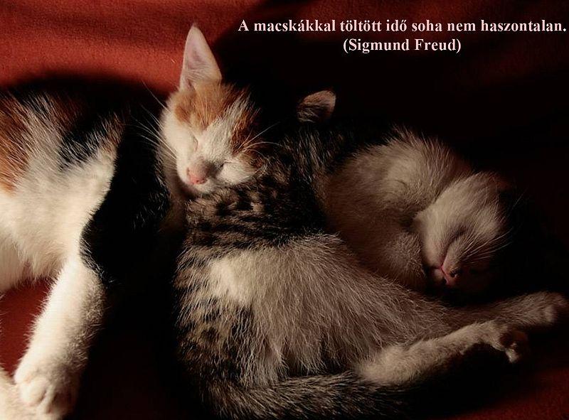 http://kepmester.silihost.hu/images/279/11092/00000027.jpg