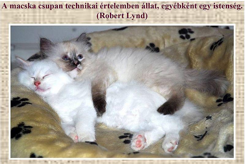 http://kepmester.silihost.hu/images/279/11092/00000029.jpg