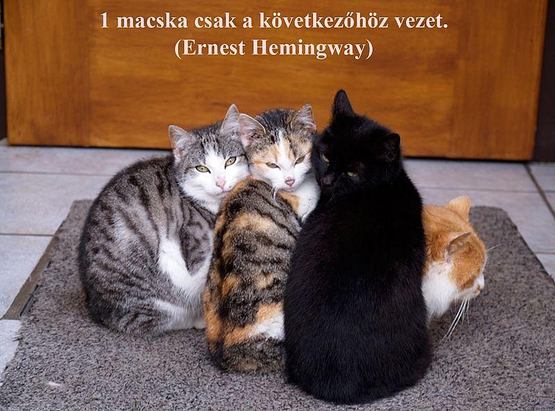 http://kepmester.silihost.hu/images/279/11092/00000030.jpg