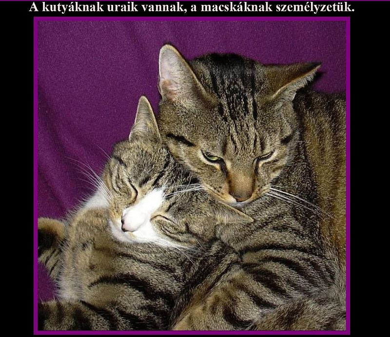 http://kepmester.silihost.hu/images/279/11092/00000032.jpg