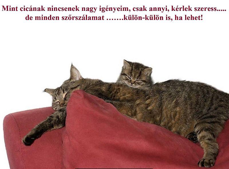 http://kepmester.silihost.hu/images/279/11092/00000033.jpg