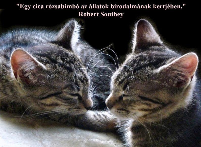 http://kepmester.silihost.hu/images/279/11092/00000034.jpg