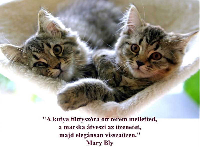 http://kepmester.silihost.hu/images/279/11092/00000035.jpg