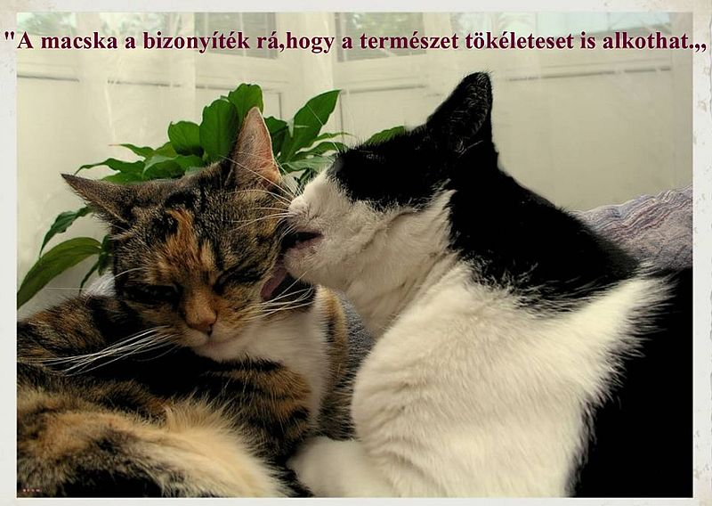 http://kepmester.silihost.hu/images/279/11092/00000040.jpg