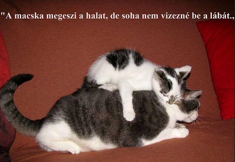 http://kepmester.silihost.hu/images/279/11092/00000041.jpg