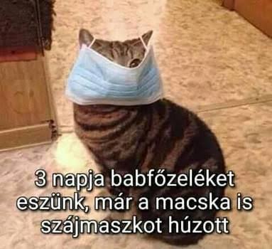 http://kepmester.silihost.hu/images/279/11093/00000051.jpg
