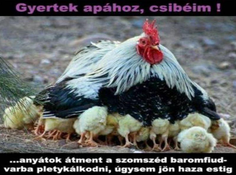 http://kepmester.silihost.hu/images/279/5664/00000437.jpg