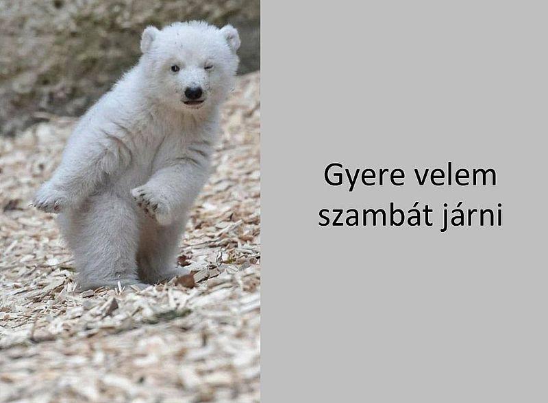 http://kepmester.silihost.hu/images/279/5664/00000441.jpg