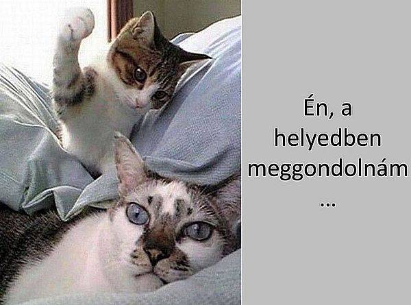 http://kepmester.silihost.hu/images/279/5665/00000059.jpg