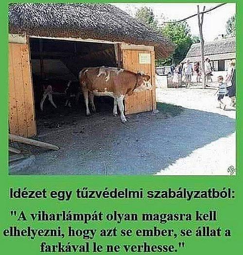 http://kepmester.silihost.hu/images/279/5665/00000314.jpg