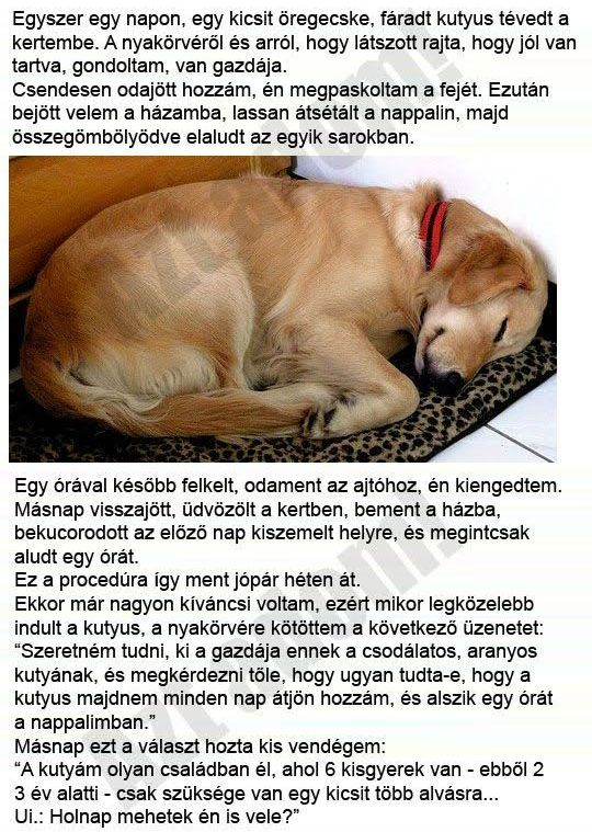 http://kepmester.silihost.hu/images/279/8453/00000213.jpg