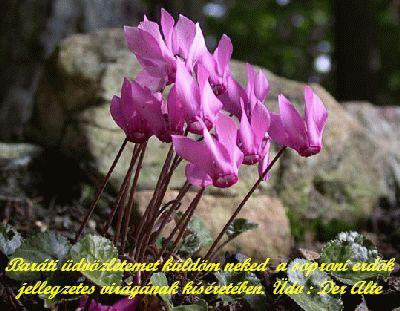 http://altebela.blogspot.com